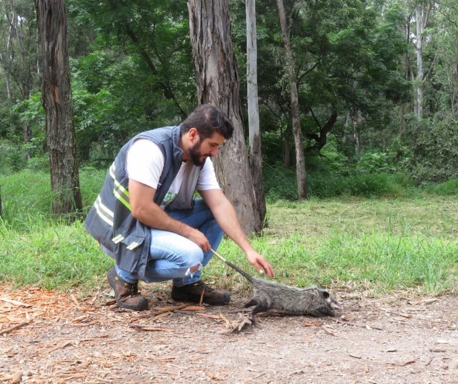 El CECA y la Unidad de Rescate de Fauna de Tlajomulco libera 9 ejemplares en Bosque Los Colomos