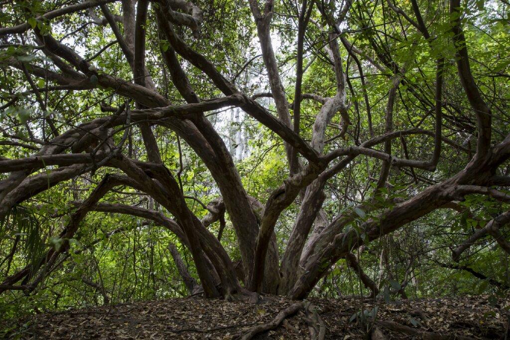 Los árboles resaltan por su grandeza natural